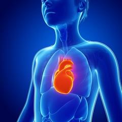 Illustration of boy's heart against blue background