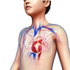 Boy's heart, illustration