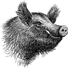 head of a wild boar