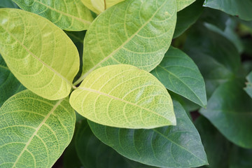 Close up tropical nature green leaf texture background