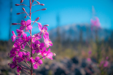 Flower sprouting in the shadow of a mountain.