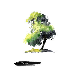 Green watercolor tree. Hand drawn watercolor painting on white background.