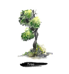 Old green watercolor tree. Hand drawn watercolor painting on white background.