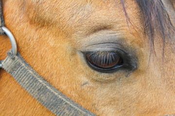 Horse eye, macro photo