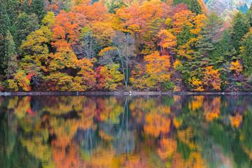 長野県大町市の青木湖の紅葉