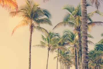 Coconut palm tree at tropical coast, made with vintage tones for background. Vintage filter. Holiday vacation concept.