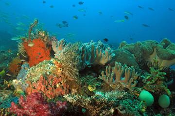 Colorful Coral Reef against Blue Water. Dampier Strait, Raja Ampat, Indonesia