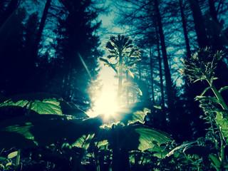 Wald aus der Sicht eines Käfers