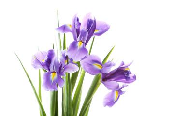 Fond de hotte en verre imprimé Iris Bouquet of iris flowers isolated on a white