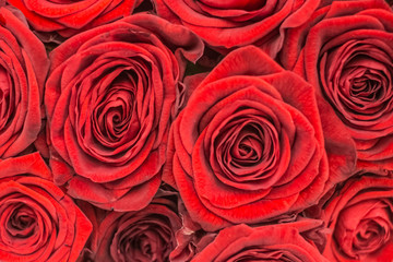 Fresh colorful bright roses closeup background
