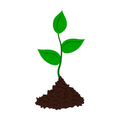 Seedling tree flat icon