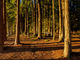 Forest Campground Late Afternoon