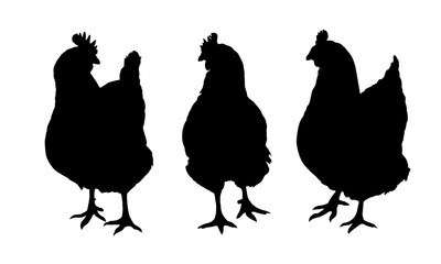 Set of three black silhouettes of hens and chickens pecking standing and walking isolated on white background - vector