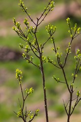 Green spring twig - Easter background