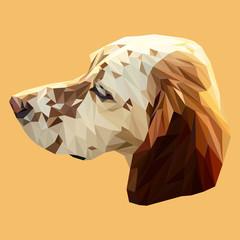 Irish Setter dog animal low poly design. Triangle vector illustration.