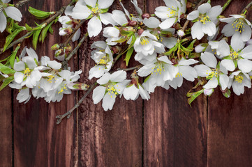 Flowering almond branches on a brown wooden surface