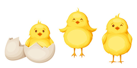 Set of three cute yellow Easter chickens isolated on a white background.