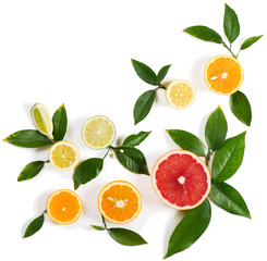 Set of different citrus fruits