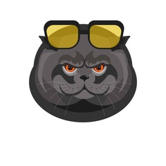 Black cat with sunglasses portrait isolated on white