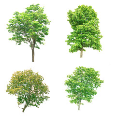 Isolated tree - Group of trees on white background.
