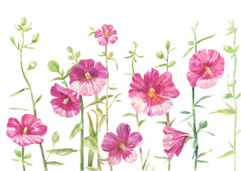 hollyhock drawing