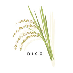 Rice Ear, Infographic Illustration With Realistic Cereal Crop Plant And Its Name