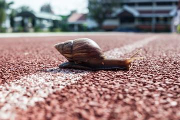 gastropod, snail, winkle on the road, slow walking to finish