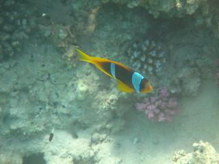 barriera corallina e pesci del mare