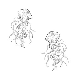 Sketch of two sea jellyfish on a white background.