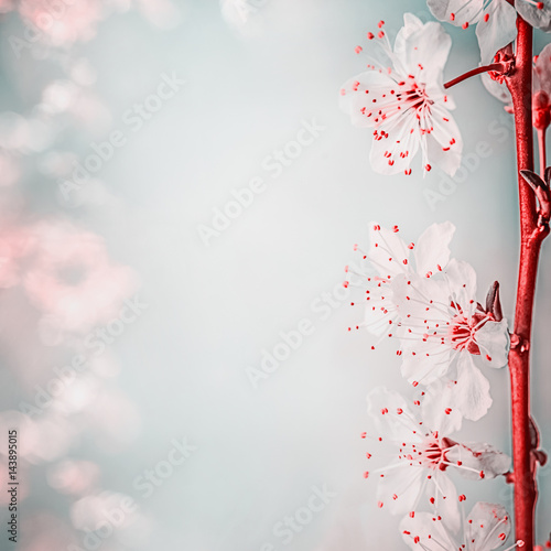 Fl Border With Beautiful Cherry Blossom Close Up Springtime Nature Background Pastel Color