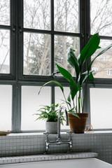 Plants on bathroom window sill