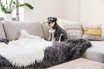 Dog sitting on couch