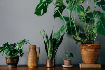 Vignette with plants and terracotta pots