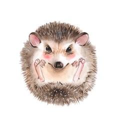Hedgehog. Cartoon watercolor illustration
