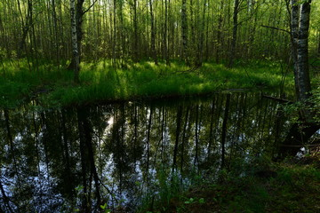 Freshness of spring morning on a forest river in fresh green foliage