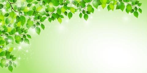 新緑 葉 春 背景