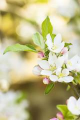 Spring Flowers./ Spring Flowers Background