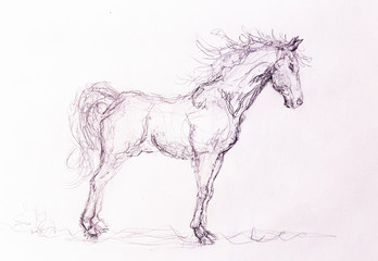 Drawing horse on old paper, original hand draw.