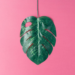 Tropical palm leaves on pink background. Minimal nature summer concept. Flat lay.