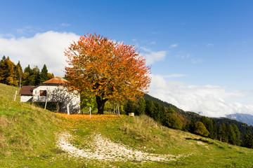 Gallio, Altopiano of Asiago, Province of Vicenza, Veneto, Italy. Shepherds house with autumn foliage.