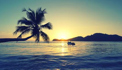 romantischer Sonnenuntergang mit Palmen am Meer