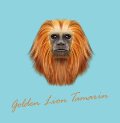 Vector Illustrated portrait of Golden lion tamarin monkey