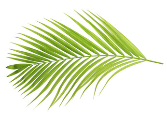 Green coconut leaf isolated Wall mural