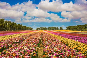 Kibbutz field
