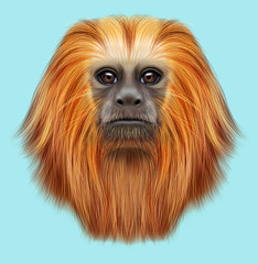 Illustrated portrait of Golden lion tamarin monkey