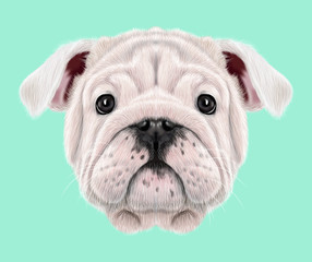 Illustrated portrait of English Bulldog puppy