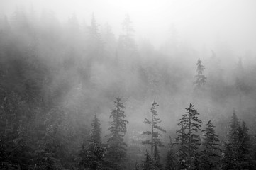 Trees on mountains on foggy morning in Alaska