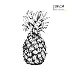 Vector hand drawn set of exotic fruits. Isolated pineapple. Tropical food. Engraved art. Delicious vegetarian objects.