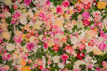 Background from flowers. Blooming spring texture.