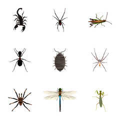 Realistic Locust, Grasshopper, Spider And Other Vector Elements. Set Of Animal Realistic Symbols Also Includes Scorpion, Tarantula, Bug Objects.